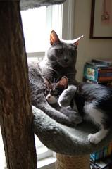 Nickel and Katydid (Aidylsock) Tags: cats pets nickel katydid