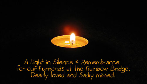 A Light in Silence &Remembrance