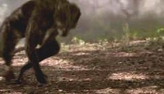 006 04 australopithecus