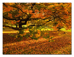 The Leaves (lyadarus) Tags: park uk autumn winter england color colour london fall leaves digital nikon europe unitedkingdom dslr chiswick naturesfinest blueribbonwinner supershot d80 specnature 18135mm abigfave anawesomeshot impressedbeauty aplusphoto superbmasterpiece diamondclassphotographer flickrdiamond