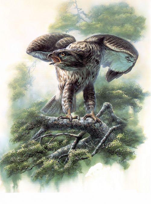 1475189420 fd5a5de477 o - cute bird paintings