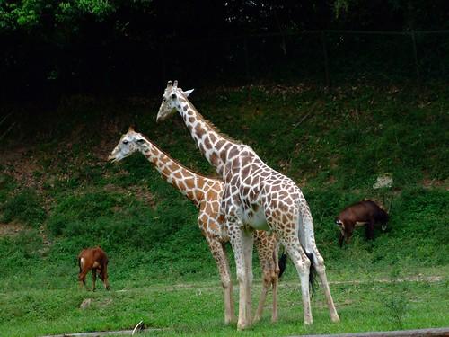zoo 138
