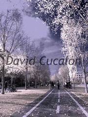 Infra red (David Cucaln) Tags: city photoshop ciudad olympus infrared 2010 ciutat santcugat santcugatdelvalles infrarojo digitalcameraclub cucalon 1440mm davidcucalon