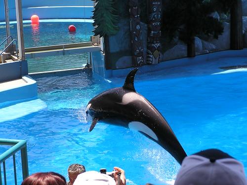 Orca 02