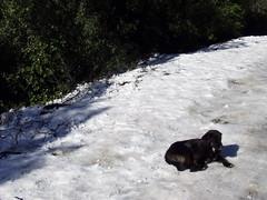 Lost III (Jorgelixious) Tags: dog snow ice fuji nieve perro finepix s5600