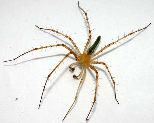 African Spiders Southe...