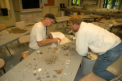 sorting myriads of moths