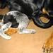 Bella squashing Sasha 7 07.JPG