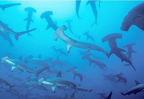 Shark Tag
