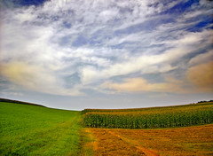 Partitioned (Nicholas_T) Tags: summer sky field clouds rural landscape lowlight cornfield pennsylvania hills creativecommons lehighvalley altocumulus northamptoncounty lowermountbetheltownship
