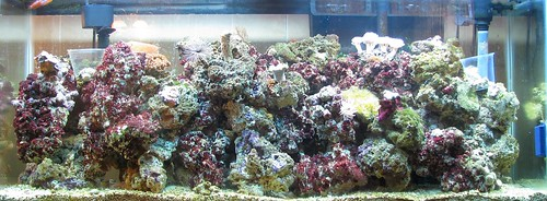 Itu0027s Designed To Translate The Basic Aquascaping Principles For Planted  Tanks To Reef Tanks And Try To Move ...