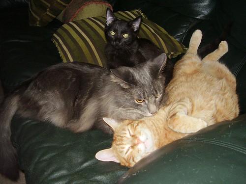 Cat Rescue York Sc