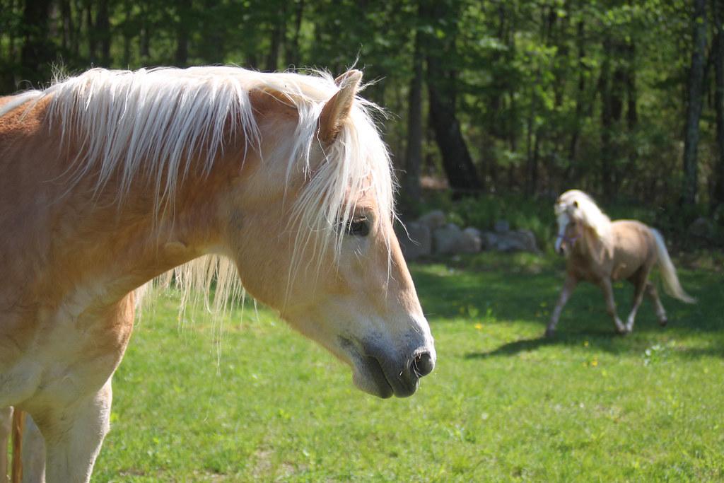 horses 037x