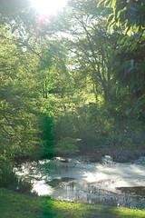 Arnold Arboretum, 15 May 2010: Rehder Pond in the afternoon sun (Chris Devers) Tags: trees tree boston forest ma spring massachusetts harvard arnold arboretum flare sunburst harvarduniversity bostonma 2010 arnoldarboretum emeraldnecklace cameranikond50 exif:exposure=001sec1100 exif:exposure_bias=0ev exif:focal_length=50mm treemuseum exif:aperture=f50 camera:make=nikoncorporation exif:flash=offdidnotfire camera:model=nikond50 flickrstats:galleries=1 exif:lens=50mmf18 meta:exif=1274018091 flickrstats:favorites=1 exif:orientation=horizontalnormal exif:filename=dscjpg exif:vari_program=auto exif:shutter_count=43695 meta:exif=1350398411