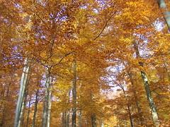 Zu kurze Farbenpracht (marion streich) Tags: trees orange sun nature forest natur gelb braun sonne wald bume helsen nordhessen farbenpracht waldeckerland