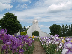 Iris Farm (farlane) Tags: iris flower barn michigan farm traversecity leelanau
