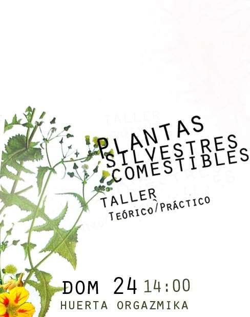 Taller de Plantas Silvestres Comestibles - Dom 24 Junio