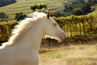 Horse - Run...