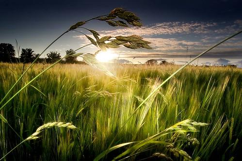 Green Isle Sunset