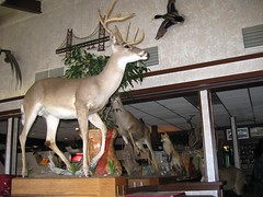 Mexican Restaurant Menagerie