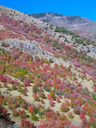 Fall color on the hillside
