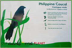 Bird Watching @ Nuvali-36