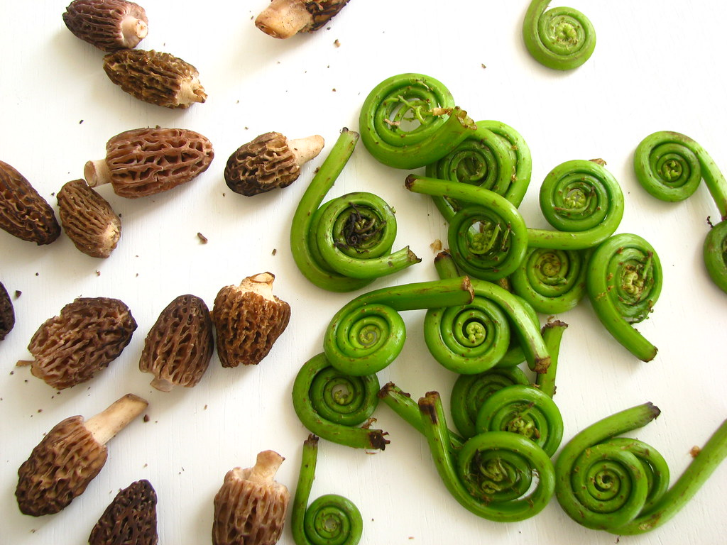 morel & fiddlehead fern