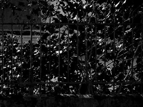 fence bw