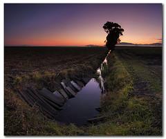 The Drain in the Field (cropped) (danishpm) Tags: sunrise canon pano australia wideangle drain nsw fields aussie aus 1020mm lonelytree murwillumbah sigmalens eos450d 450d sorenmartensen hitechgradfilters 09ndreversegradfilter