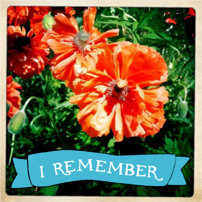 Remebrance Day: Poppies