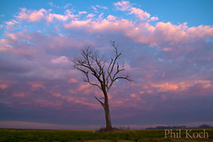Slumber (Phil~Koch) Tags: light sky love nature wisconsin clouds sunrise landscapes gallery peace phil series sunet koch horizons