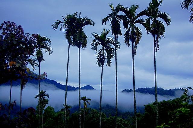 Taiwan Mist