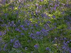 (AMred) Tags: flowers kewgardens london april2007
