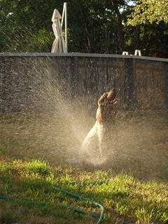 Lucy sitting in the sprinkler
