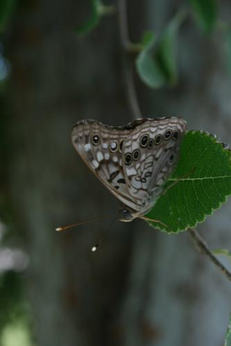 Butterfly, 8/2007