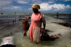 Picker of Algae (Prittibaby) Tags: sea business kelp zanzibar algae cultivation picker abigfave colorphotoaward infinestyle diamondclassphotographer