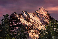 The Eiger at twilight, Switzerland (Color) (lilcrazyfuzzy) Tags: pink light sunset orange mountain snow alps tree colors landscape switzerland evening twilight colorful warm swiss explore grindelwald eiger berner oberland schreckhorn 10faves nikonstunninggallery fiveflickrfavs 5flickrfavs