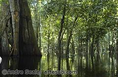Amazonia inundada