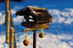 For the needy (herrolm) Tags: schnee winter house snow bird thringen feeding birdhouse thuringia explore vogelhaus deesbach