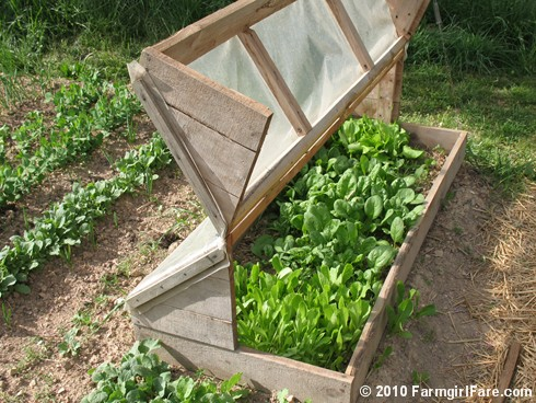 Amish Cold Frame  4