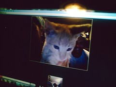 Talking to a kitten via skype