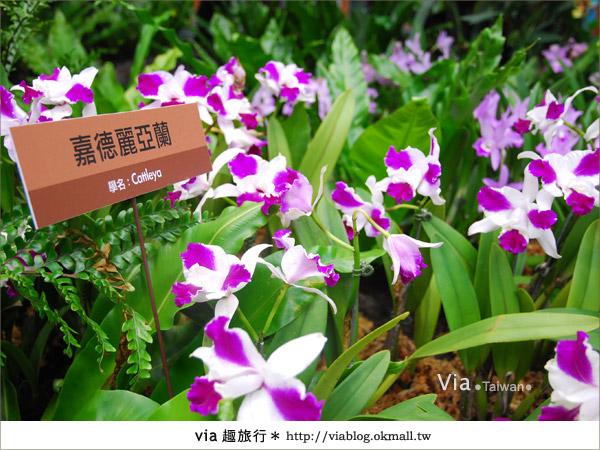 【花博夢想館】via遊花博(下)~新生三館:花博夢想館及未來館、天使生活館16