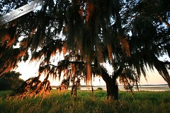 Spanish Moss (Chrissy Avila Photography (cHrIsSy1554)) Tags: sky nature beautiful landscape photography natural offroad florida wildlife backcountry myakka floridawildlife southfloridawildlife offroadfun ©csquaredphotography chrissy1554 ©christinaavilaphotography ©chrissyavilaphotography wwwchrissyavilaphotographycom