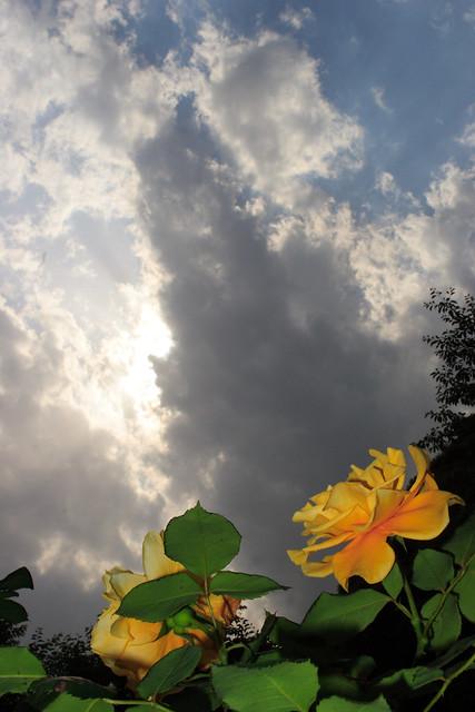 陽光映える花日和