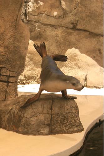 Tesco the Seal