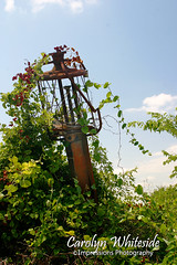 Gas Pump Trellis