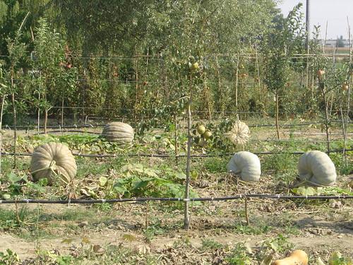 Huertas en cada jardin