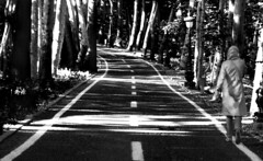 Way to Go (Hamed Saber) Tags: street trees bw girl contrast persian iran perspective persia jungle saber gathering iranian  hamed mahsa flickrmeetup sadabad farsi   nasrin          flickr:user=rahaa110 upcoming:event=239232 upcoming:event=259195