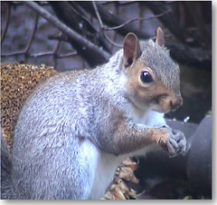 squirrel sitting