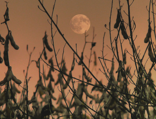 sunset moon field neck evening newjersey twilight weeds dusk farm contest group mother nj resort shore winner jersey colts jerseyshore challenge pinnacle naturesfinest bigmomma blueribbonwinner coltsneck diamondclassphotographer joiseyshowaa thepinnaclehof tphofweek13 joiseyshowa